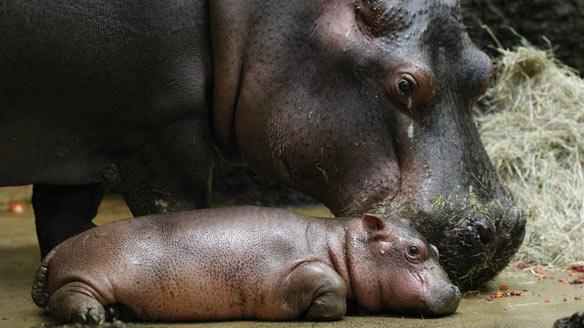 Hippo-cp-w5831671